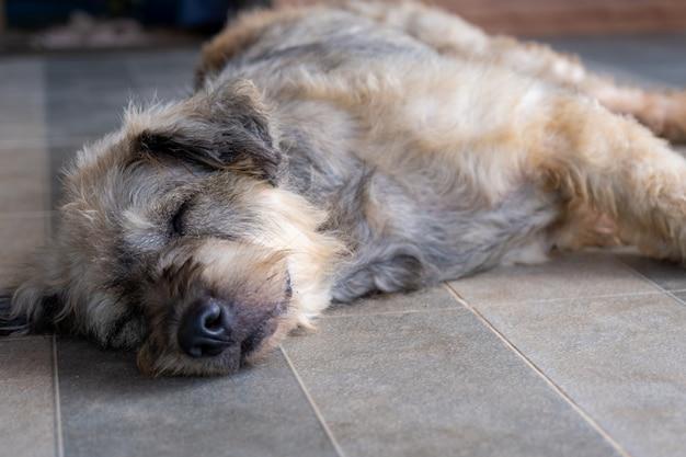 Pies leniwy spać położyć psi siedzieć koncepcja.