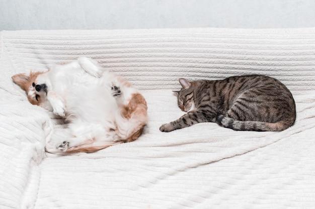Pies leży na łóżku na plecach. obok spać kot. koncepcja kot i pies