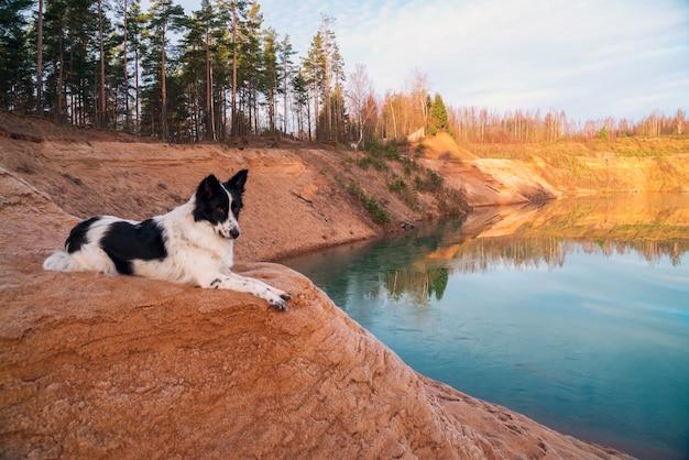 Pies leży na piaszczystym zboczu na brzegu kamieniołomu.