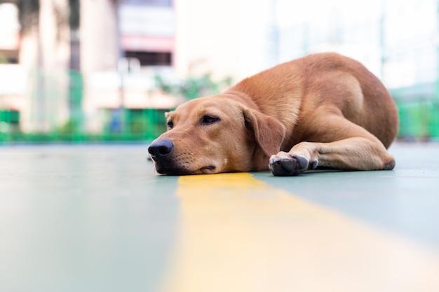 Pies leży na ziemi