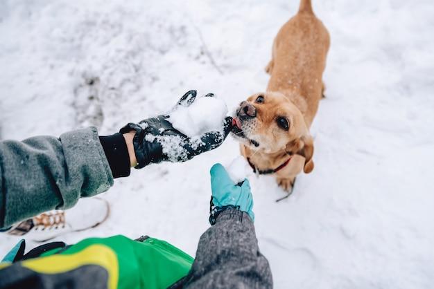 Pies liże śnieg