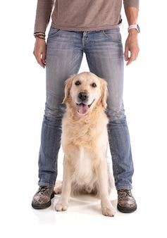 Pies między nogami swojej kochanki na białym tle