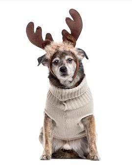 Pies mieszaniec przebrany za renifera