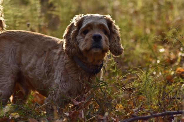 Pies myśliwski w jesiennym lesie