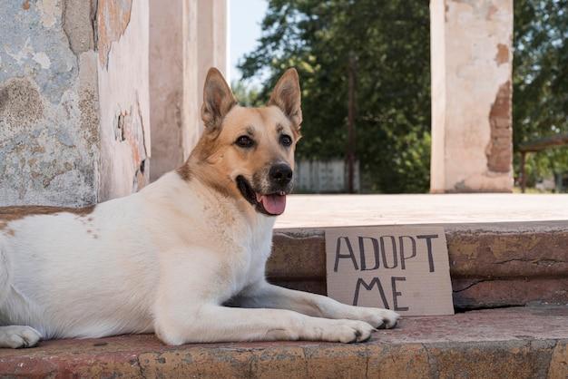 Pies na schodach z banerem adopcyjnym