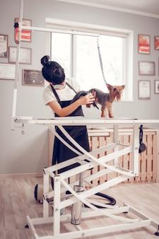 Pies na stole. kobieta w mundurze suszącym psa stojąca na stole po umyciu go