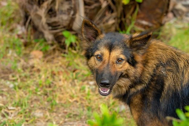Pies na świeżym powietrzu spaceruje po trawniku na podwórku
