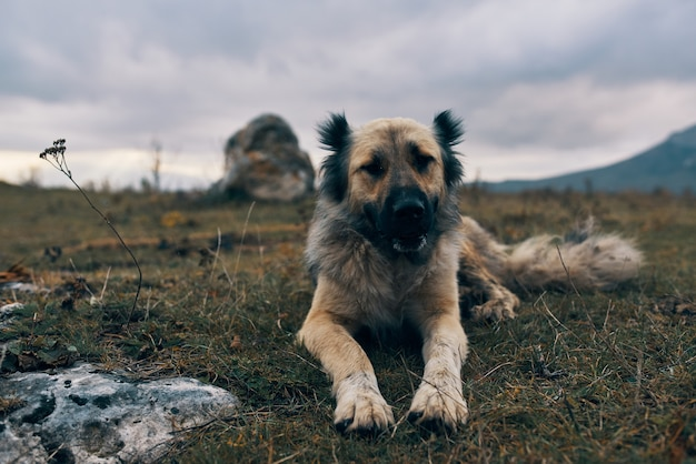 Pies na świeżym powietrzu w górach leży w podróży przyjaźni reszta trawy