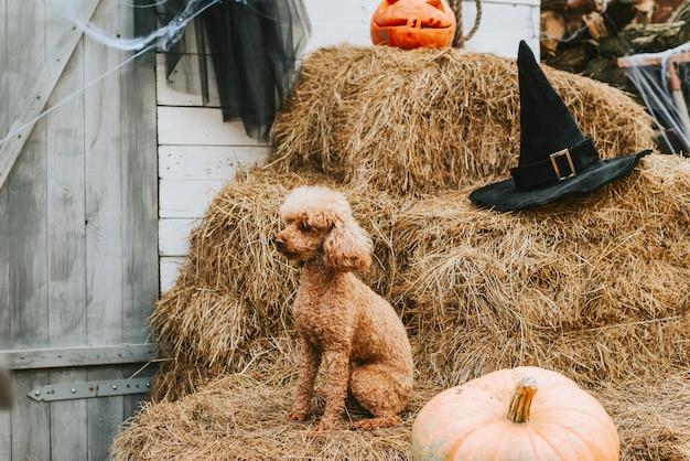 Pies na werandzie domu udekorowanego z okazji halloween