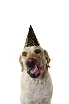 Pies nowy rok lub kapelusz urodziny
