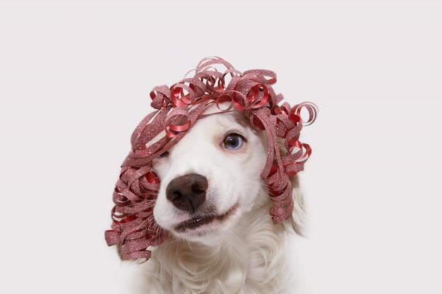 Pies obchodzi urodziny, nowy rok lub przyjęcie karnawałowe w czerwonej wstążce obecnej jak peruka i robiąc głupią minę. odosobniony