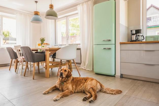 Pies obok stołu i krzeseł pod lampami we wnętrzu domu z pastelową lodówką. prawdziwe zdjęcie