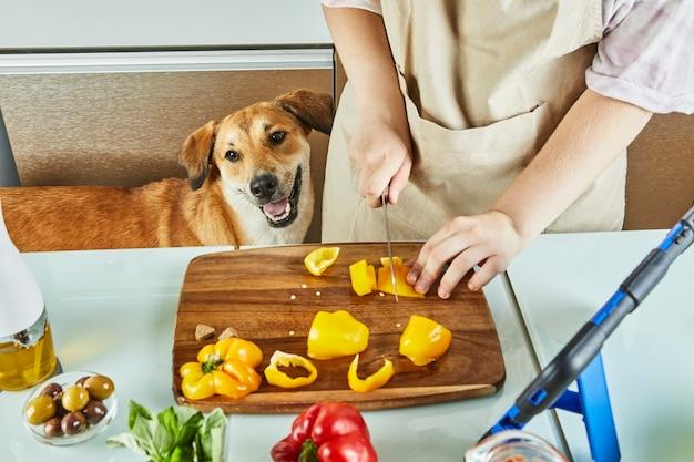 Pies obserwuje, jak nastolatek przygotowuje wirtualny warsztat online i wyświetla cyfrowy przepis na tablecie z ekranem dotykowym, jednocześnie przygotowując zdrowy posiłek w domowej kuchni.