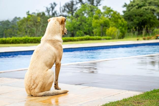 Pies patrząc na pusty basen. widok na psie wybrzeże.