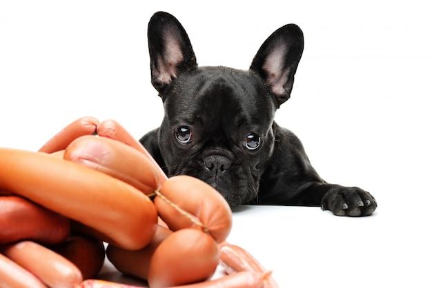 Pies patrzy na kilka kiełbasek. buldog francuski i kiełbaski. śmieszny portret czarny buldog.