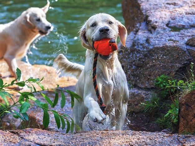 Pies pływa w jeziorze