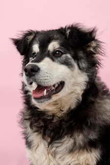 Pies pod dużym kątem, odwracając wzrok
