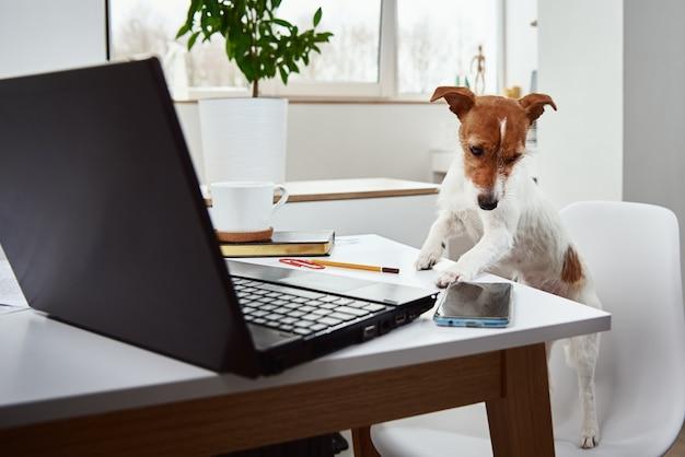 Pies pracuje na laptopie w domowym biurze.
