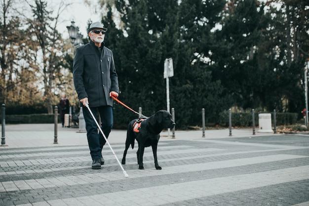 Pies przewodnik pomaga niewidomemu przejść przez ulicę.