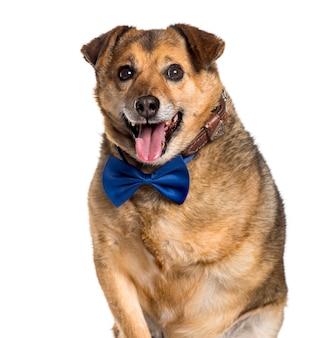 Pies rasy mieszanej z zaginioną nogą, patrząc na kamery na białym tle