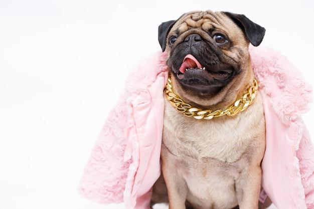 Pies rasy mops w modzie różowe futro i złoty łańcuszek na białym tle