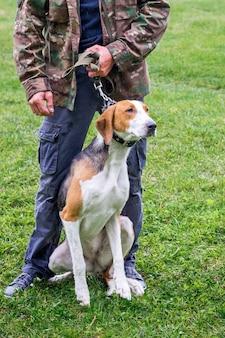 Pies rasy ogar estoński na smyczy