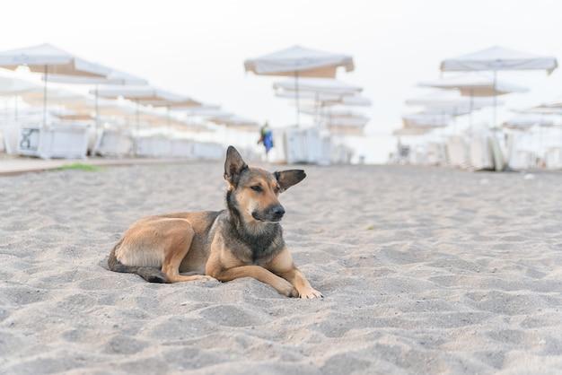Pies relaksuje na piasek tropikalnej plaży blisko błękita
