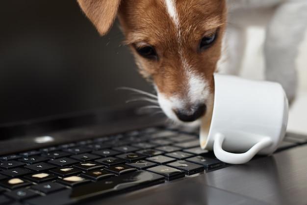 Pies rozlał kawę na klawiaturze laptopa. uszkodzenie mienia od zwierzaka