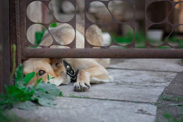 Pies sam i porzucony za płotem. koncepcja ochrony zwierząt domowych