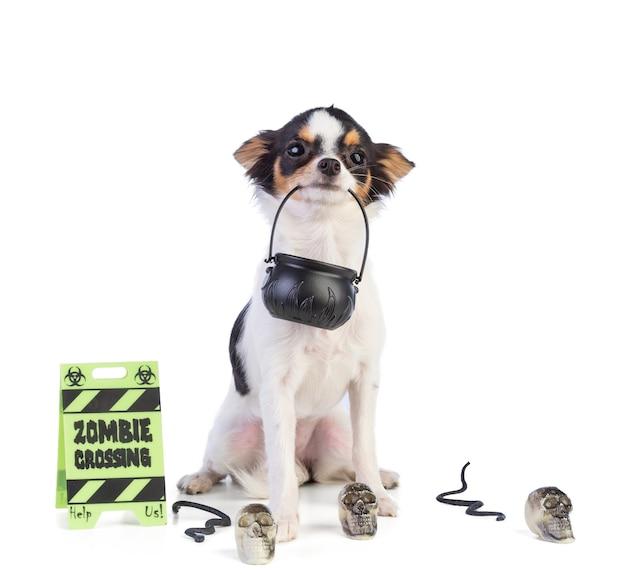 Pies siedzący na halloween z czaszkami na białym tle