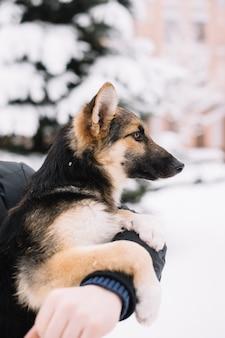 Pies siedzi na rękach mężczyzny