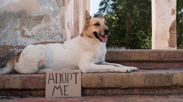 Pies siedzi na schodach z banerem adopcyjnym