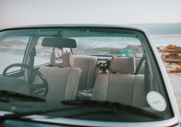 Pies siedzi na tylnym siedzeniu starego stylowego samochodu
