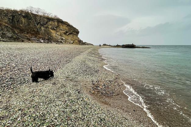 Pies spacerujący po szklanej plaży