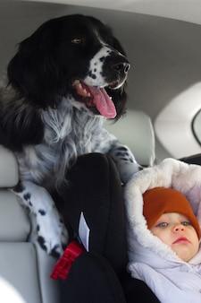 Pies spaniel jeździ samochodem w bagażniku crossovera z selektywnym skupieniem dzieci
