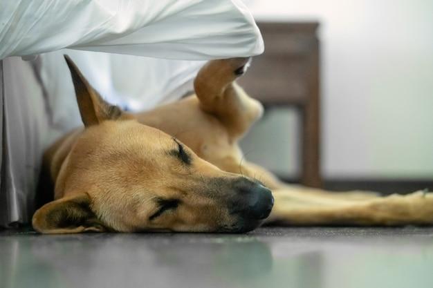Pies śpi na podłodze i przykrywa się kocem, zabawna sytuacja, niezwykła