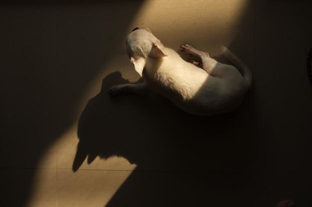 Pies śpi na podłodze w kwadratowym miejscu ciepłego światła słonecznego od drzwi