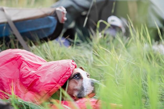 Pies spoczywa w śpiworku przed kajakiem na kempingu.
