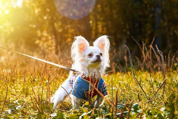 Pies stojący na trawie w słoneczny dzień jesieni