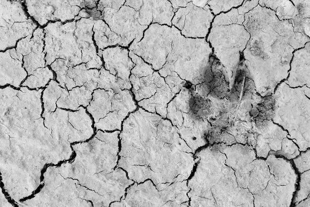 Pies stóp wydruku suchej gleby na tle