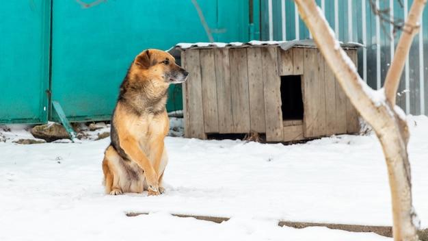 Pies stróżujący w pobliżu budy zimą siedzący na śniegu