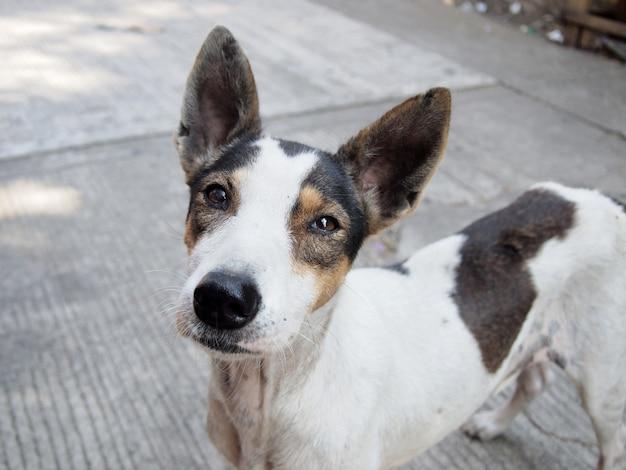 Pies uliczny