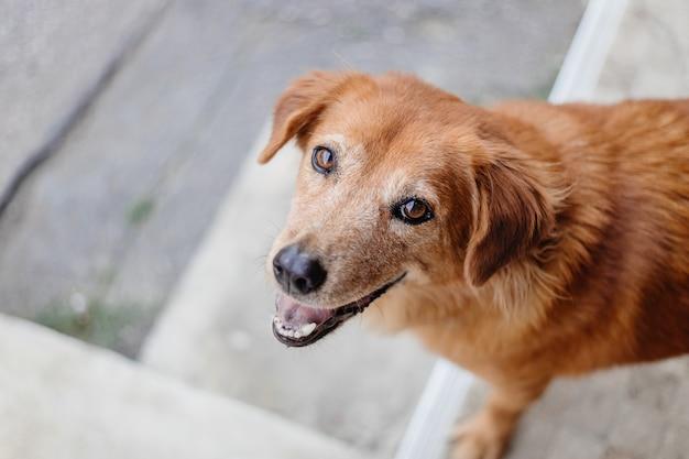 Pies uśmiech słodkie niewinne oczy patrząc aparat