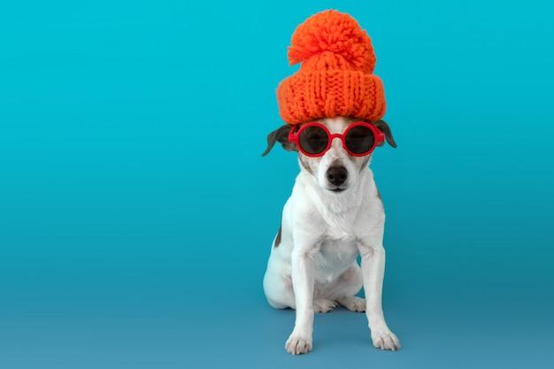 Pies w kapeluszu i szaliku