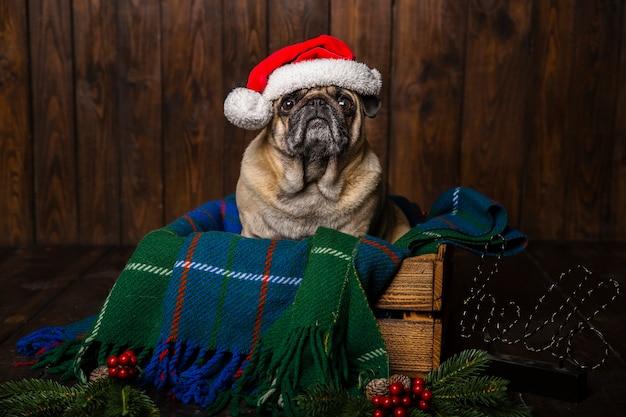Pies w kapeluszu santa w drewnianej trumnie obok ozdób choinkowych