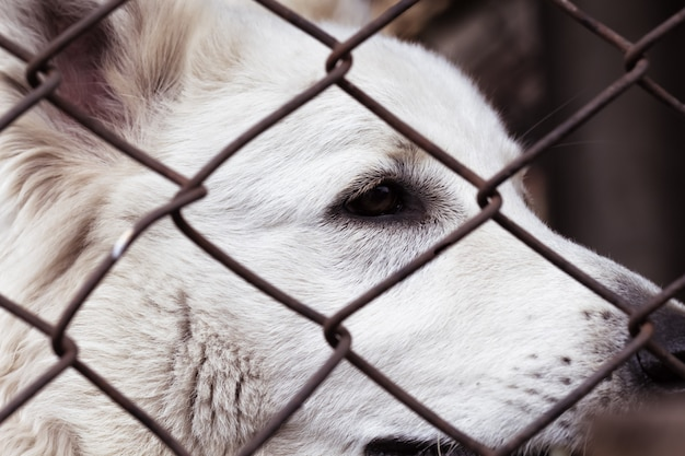 Pies w klatce, o smutnej twarzy. pies w oczach schronienia porzuconego zwierzęcia