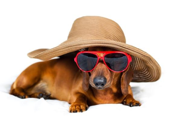 Pies w modnym kapeluszu i czerwonych okularach