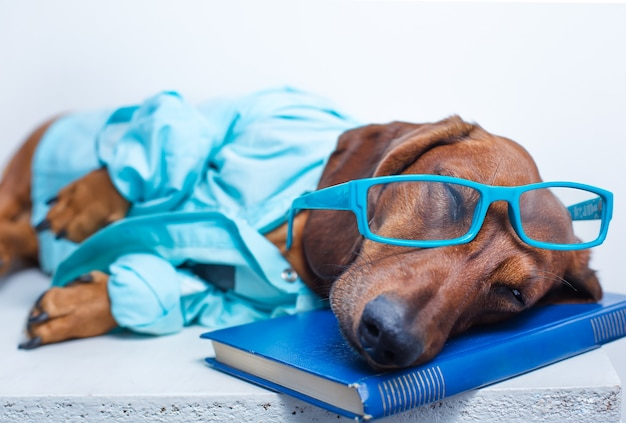 Pies w okularach i kurtce do spania na książce