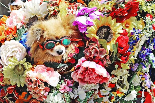 Pies w okularach w otoczeniu kwiatów