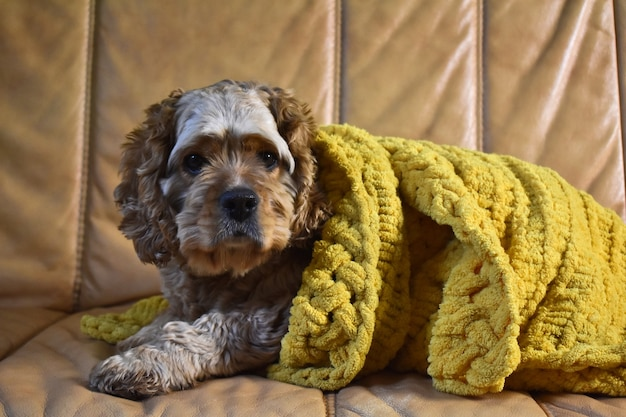 Pies w przytulnej kratę spoczywa na kanapie